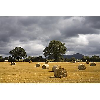 Clogheen County Tipperary Irland hø baller i feltet PosterPrint