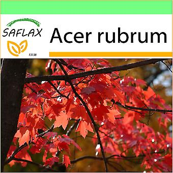 Saflax - Garden to Go - 20 seeds - Red Maple - Erable rouge - Acero rosso  - Arce rojo - Rotahorn