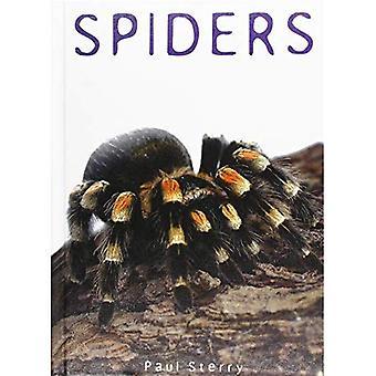 Spinnen (erforschen Natur)