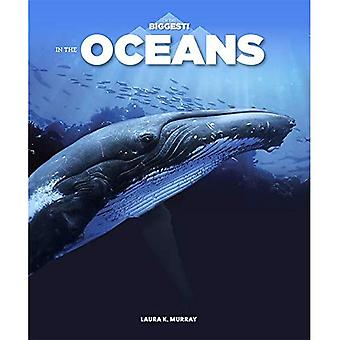 In the Oceans (I'm the Biggest)