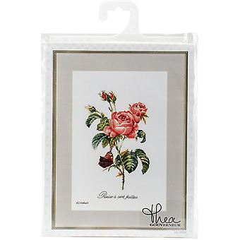 Rose Redoute On Aida Counted Cross Stitch Kit-10.25