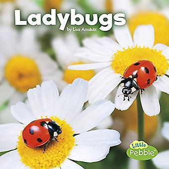 Ladybugs (Little Critters)
